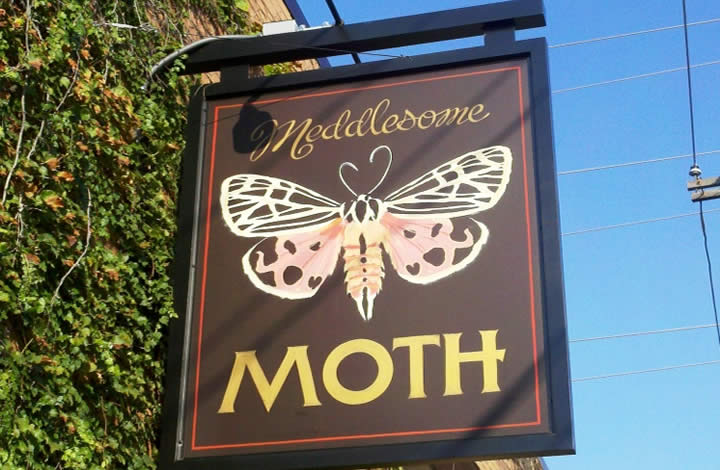 Meddlesome Moth